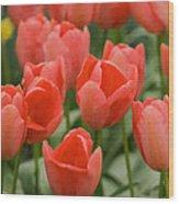 Tulips 33 Wood Print