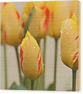 Tulips 6 Wood Print