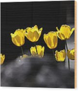 Tulips 6077 Wood Print