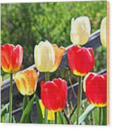 Tulips Aglow Wood Print by James Hammen