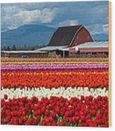 Tulips And Barn Wood Print