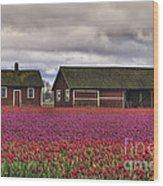 Tulips And Barns Wood Print