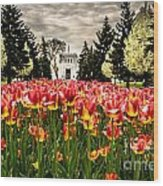 Tulips And Building Wood Print