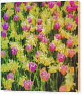 Tulips And Daffodils Wood Print by Jill Balsam