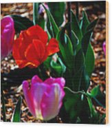 Tulips. Arlington Cemetery Wood Print
