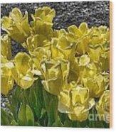 Tulips At Dallas Arboretum V23 Wood Print