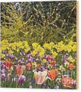 Tulips At Dallas Arboretum V32 Wood Print