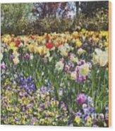Tulips At Dallas Arboretum V33 Wood Print