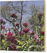 Tulips At Dallas Arboretum V35 Wood Print