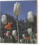 Tulips At Dallas Arboretum V36 Wood Print
