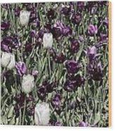 Tulips At Dallas Arboretum V43 Wood Print