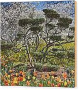 Tulips At Dallas Arboretum V49 Wood Print