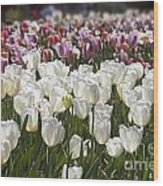 Tulips At Dallas Arboretum V52 Wood Print