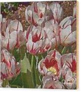 Tulips At Dallas Arboretum V53 Wood Print