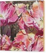 Tulips At Dallas Arboretum V58 Wood Print