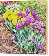 Tulips At Dallas Arboretum V65 Wood Print