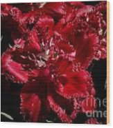 Tulips At Dallas Arboretum V74 Wood Print