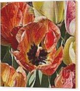 Tulips At Dallas Arboretum V81 Wood Print