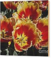 Tulips At Dallas Arboretum V84 Wood Print