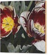 Tulips At Dallas Arboretum V92 Wood Print