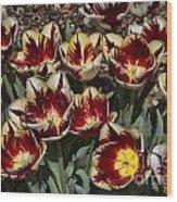 Tulips At Dallas Arboretum V93 Wood Print