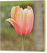 Tulips At Thanksgiving Point - 18 Wood Print