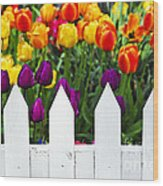Tulips Behind White Fence Wood Print by Elena Elisseeva