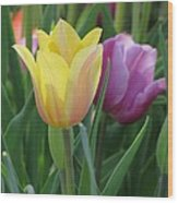 Tulips - Caring Thoughts 03 Wood Print