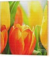 Tulips Wood Print by Elena Elisseeva