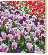 Tulips Field Wood Print