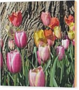 Tulips - Field With Love 07 Wood Print