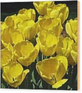 Tulips - Field With Love 17 Wood Print
