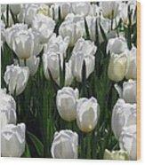 Tulips - Field With Love 19 Wood Print