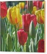 Tulips - Field With Love 22 Wood Print