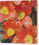 Tulips - Field With Love 25 Wood Print