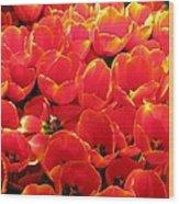Tulips - Field With Love 28 Wood Print
