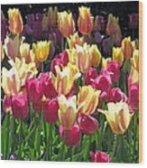 Tulips - Field With Love 35 Wood Print