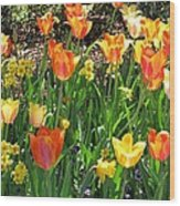 Tulips - Field With Love 41 Wood Print