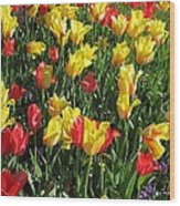 Tulips - Field With Love 49 Wood Print