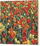Tulips - Field With Love 51 Wood Print