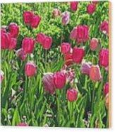 Tulips - Field With Love 54 Wood Print