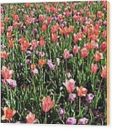Tulips - Field With Love 55 Wood Print