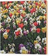Tulips - Field With Love 57 Wood Print