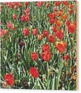 Tulips - Field With Love 62 Wood Print
