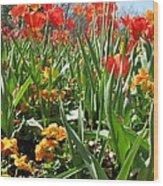 Tulips - Field With Love 64 Wood Print