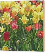 Tulips - Field With Love 65 Wood Print