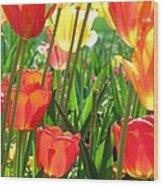 Tulips - Field With Love 69 Wood Print