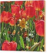 Tulips - Field With Love 71 Wood Print