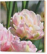 Tulips Flowers Garden Art Prints Pink Tulip Floral Wood Print
