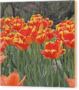 Tulips From Brooklyn Wood Print